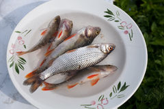 Small raw fish Royalty Free Stock Images