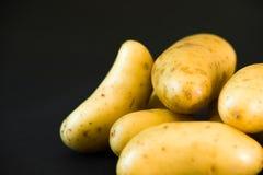 Small raw gourmet potatoeson black background. Small raw gourmet potatoes Royalty Free Stock Photography