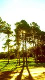 The small ray of light that asks permission between the leaves of the tree royalty free stock photo