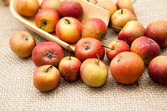 Small, red apples Royalty Free Stock Photos