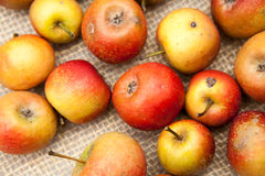Small, red apples Royalty Free Stock Photo