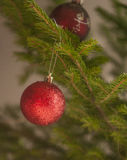 Small red bauble on green Stock Images