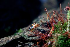 Small red beetle Royalty Free Stock Photo