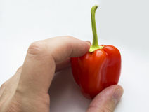 Small red bell pepper Royalty Free Stock Photography