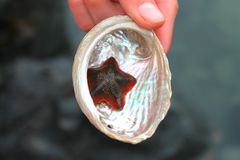 Small red and black starfish in a pearly coloured sea shell Royalty Free Stock Photography