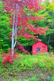 Red Cabin in the Woods. Small Red Cabin in Woods royalty free stock photo