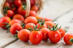 Small red cherry tomatoes spill out of a wicker basket. Royalty Free Stock Photos