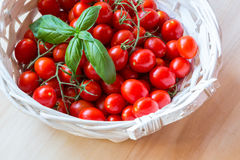 Small red cherry tomatoes in a wicker basket on an old wooden table. A view of small red cherry tomatoes in a wicker basket on an old wooden table Stock Photos