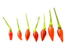 Small Red Chilis isolated on white background Royalty Free Stock Photo