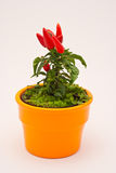 Small red decorative chilli pepper Royalty Free Stock Images