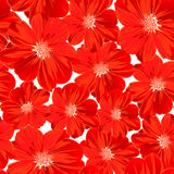 Small red flowers in a seamless pattern Stock Images