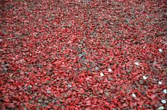 Small Red gravel Pebble floor texture, perspective. Selective focus. Stone background stock photos