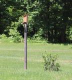 Wood pecker, Birdhouse, Post, Outside stock photo