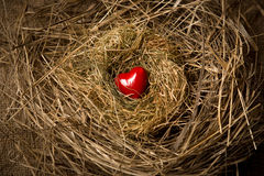 Small red heart lying in birds nest Royalty Free Stock Image