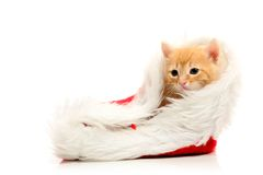 Small red kitten and christmas cap Royalty Free Stock Photos