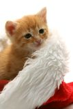Small red kitten and christmas cap Stock Images