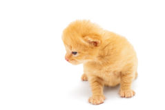 Small red kitten isolated on white Stock Photography