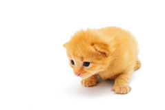 Small red kitten isolated on white Royalty Free Stock Photo