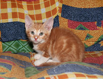 Small red kitten with milk smeared nose sits Royalty Free Stock Photos