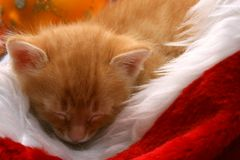 Small red kitten sleeps on christmas cap Royalty Free Stock Image