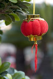 Small red lantern. A single small asain red latern hang up in a plant.Lantern means rich,happy,reunion in China Royalty Free Stock Photos