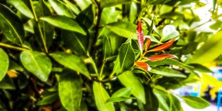 Small red leaves and green leaves royalty free stock photos