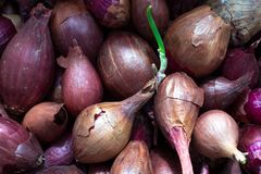 Small red onion on for boarding.  stock photos