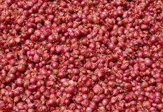 Small Red Onions Royalty Free Stock Photo