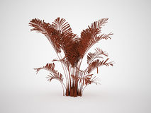 Small red palm tree Stock Images