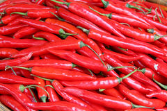 Small red peppers Stock Images