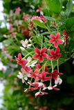 Small red and pink flowers royalty free stock photography