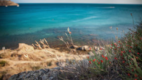 Small red poppies at a rocky coast with blue sea Royalty Free Stock Images