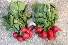 Small red radish, European radish. Red radish, European radish, mooli, Raphanus sativus, root vegetable with small lobed leaves and red small globose to oval stock images