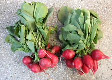 Small red radish, European radish Royalty Free Stock Image