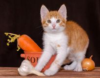 Small red kitten is sitting on the rough wooden boards of the table next to an orange bowl for soup and carrots with a green top,. Small red tabby kitten is stock photos