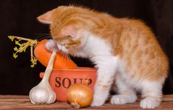 Small red kitten is sitting on the rough wooden boards of the table next to an orange bowl for soup and carrots with a green top,. Small red tabby kitten is stock photography