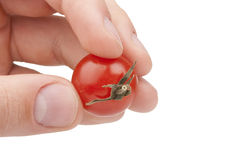 Small red tomato Royalty Free Stock Photos