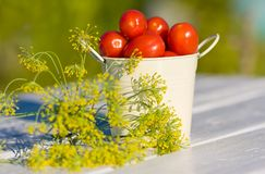 Small red tomatoes and dill on wooden table in summer Royalty Free Stock Images