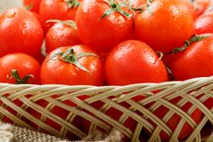 Small red tomatoes in a wicker basket on an old wooden table. Ripe and juicy cherry. And burlap cloth, Terevan style country style. selective focus royalty free stock photos