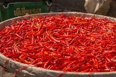 Small, red, very  spicy chilli peppers on an asian market. Stock Image