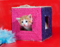 Small red and white kitten gets out of scratching posts on red Stock Images