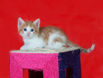 Small red and white kitten sitting on scratching post on red Royalty Free Stock Images