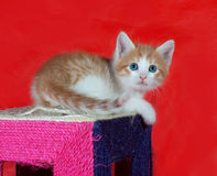 Small red and white kitten sitting on scratching post on red Stock Photography