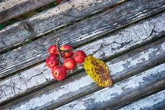Small red wild apples Royalty Free Stock Image