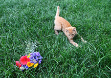 Small redheaded kitten and bright flowers Stock Image