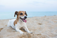 Small relaxing dog Royalty Free Stock Images