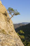 Small relict pines on a steep rocky slope. Karaul-Oba, Novyy Svet, Crimea Stock Photos