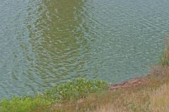 SMALL RIPPLES ON WAVES. Sloping damwall with vegetaion next to rippled water royalty free stock images