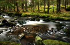 Small river. In the forest - Czech republic - Sumava Royalty Free Stock Photos