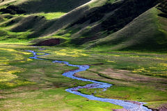 Small river in alpine meadows Royalty Free Stock Photos